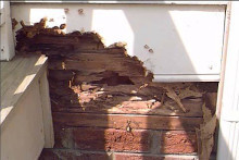 Pest Damage Repair